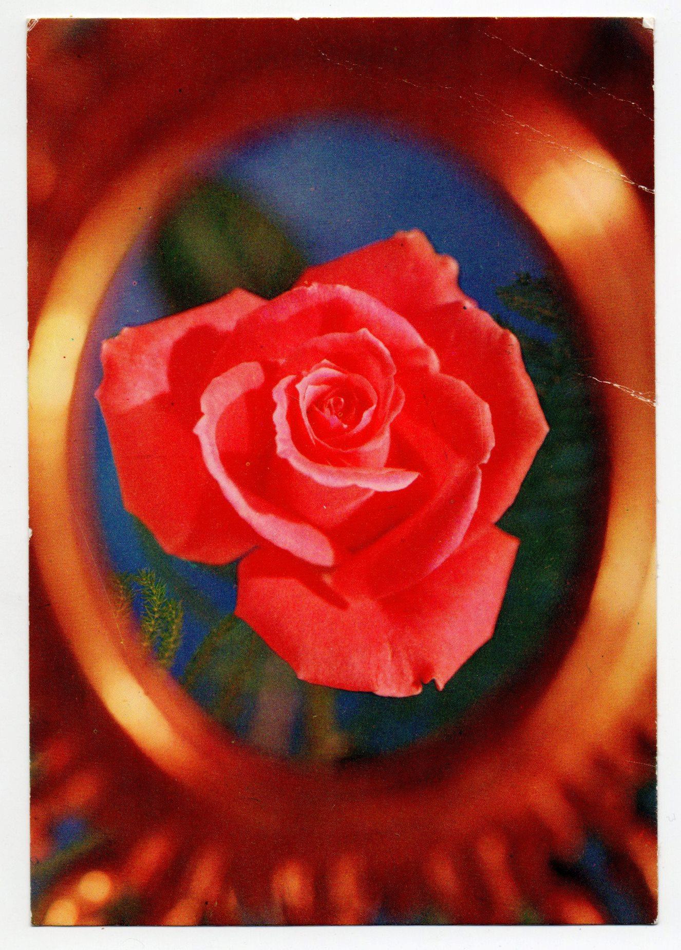 Поштова листівка-поздоровлення від Ковачевича-Чудновського